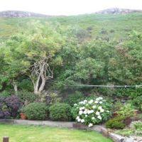The Garden - Photo 3